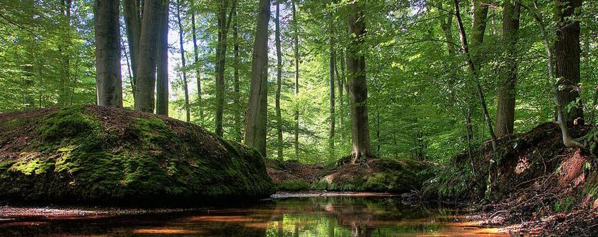 15 mooiste wandelroutes op de Veluwe