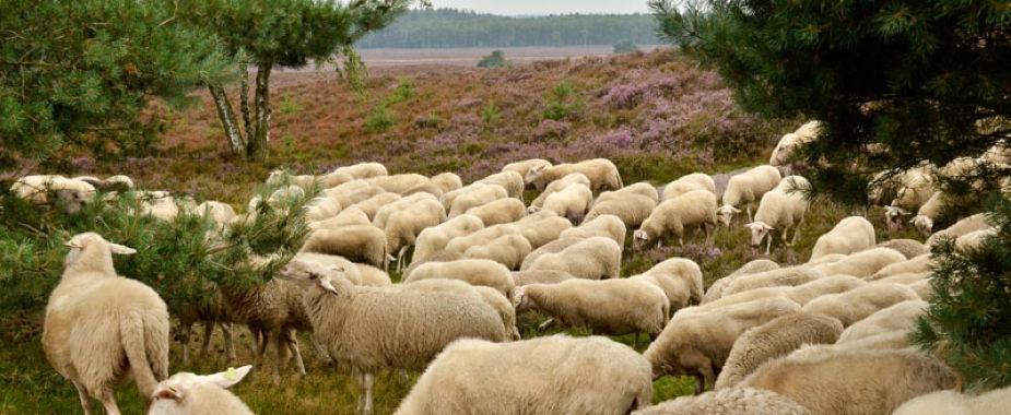 Nordic Walking, 10 mooiste routes