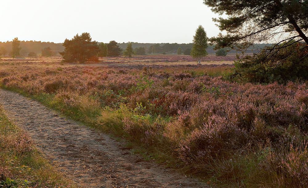 Wandelroute Kroondomein 5,5 km