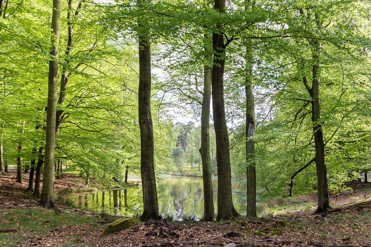 Fietsroute: De Elspeter Heide 44 km
