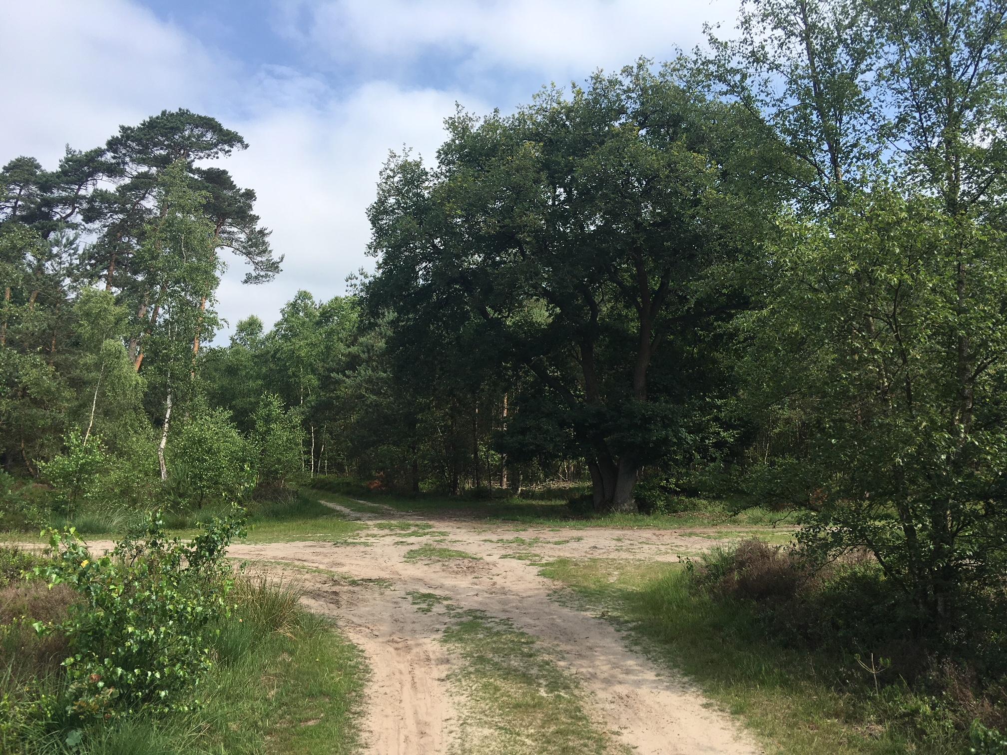 Wandelroute 10 km Veluwe