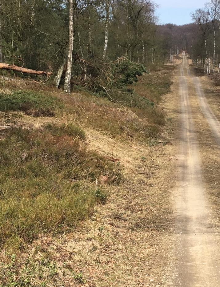 Wandelroute Kroondomein Veluwe 10 km