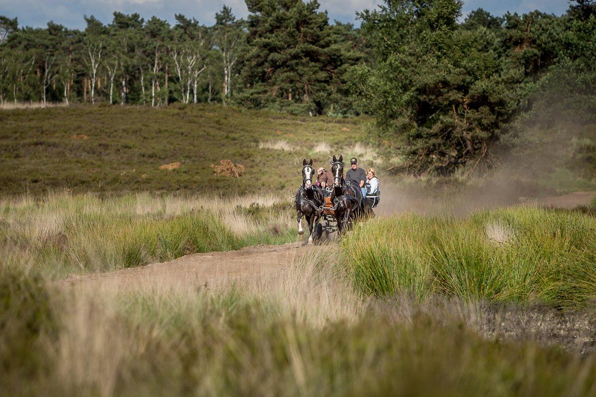 Leeftijd Paardenvierdaagse Epe