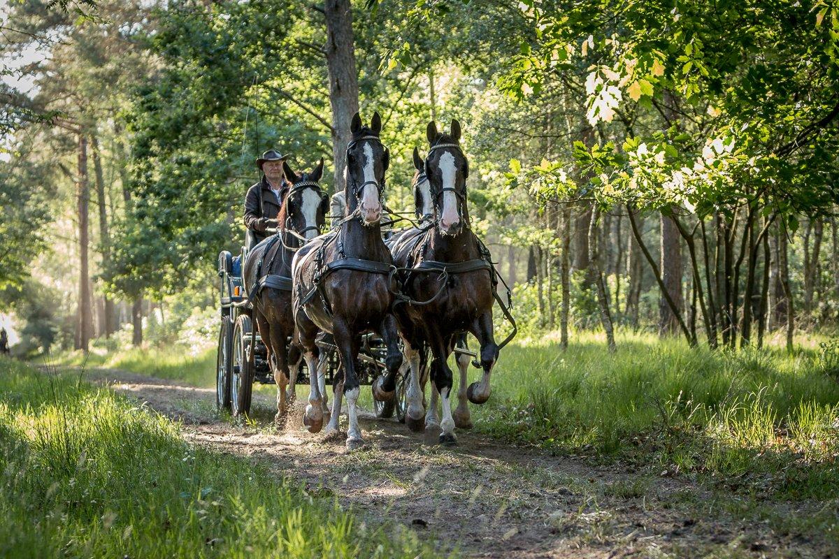 Paardenvierdaagse Epe 2018