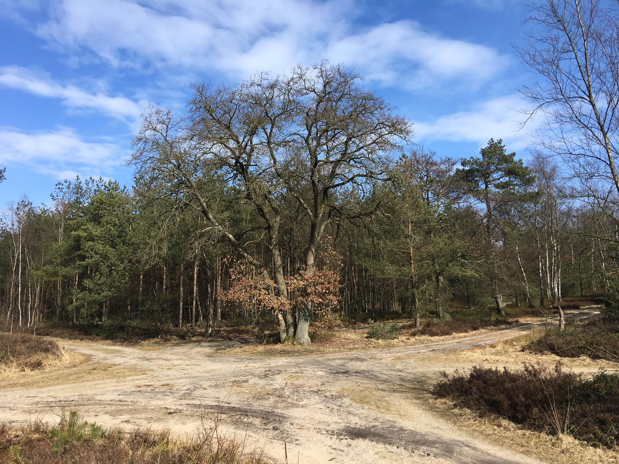 Wandelroute Veluwe 10 km
