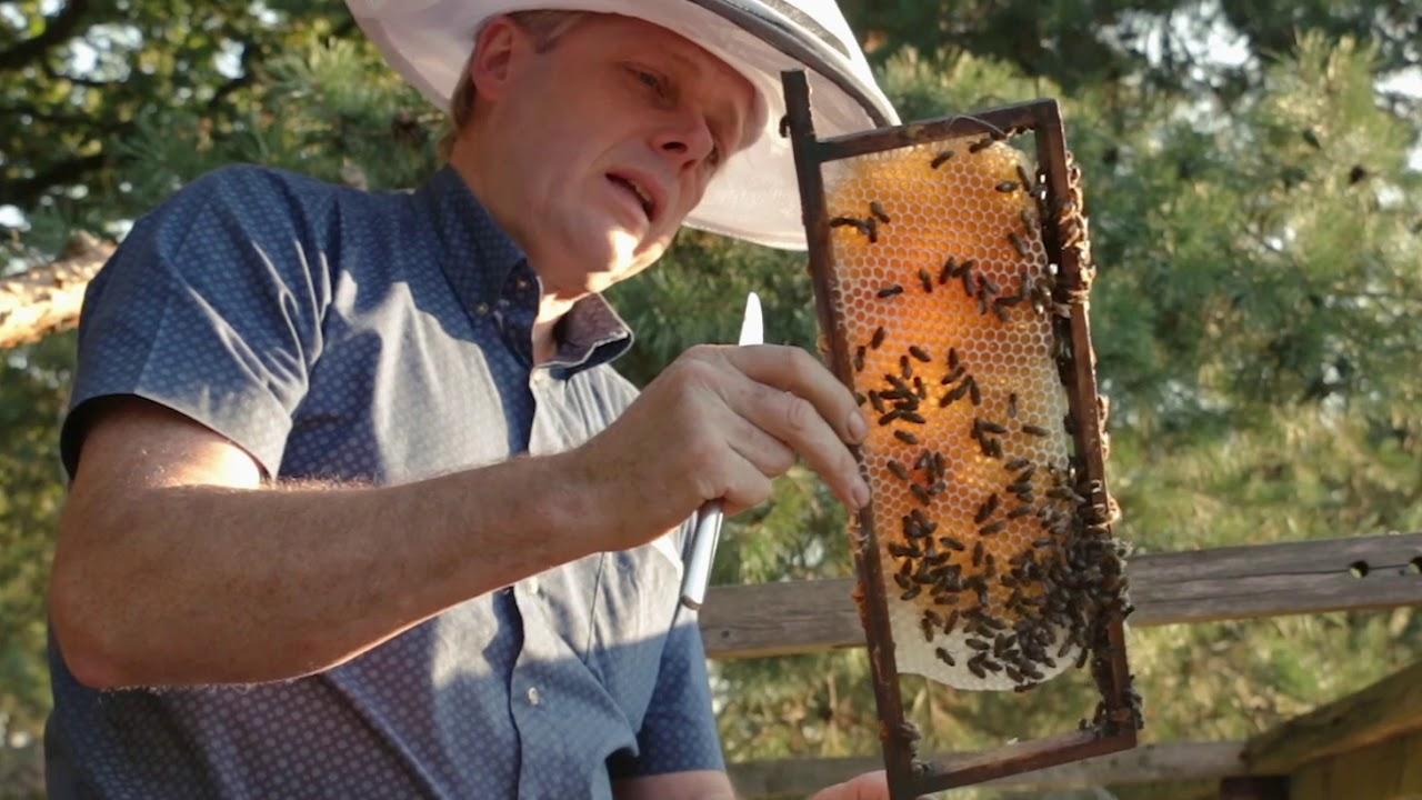 Honingwinkel De Werkbij
