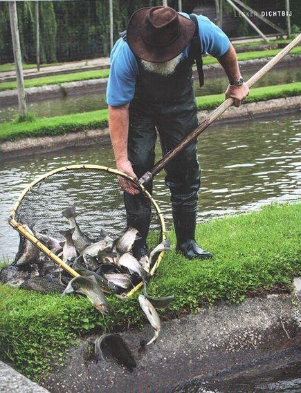 Vis van de Veluwe, forellenkwekerij 't Smallert