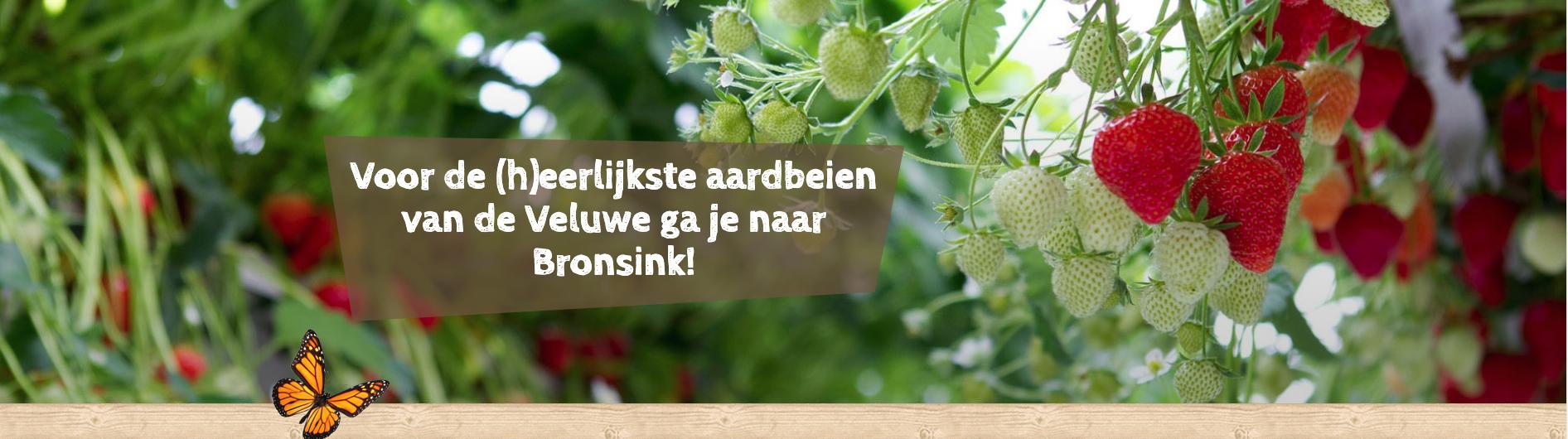 Streekproduct: aardbeien van de familie Bronsink