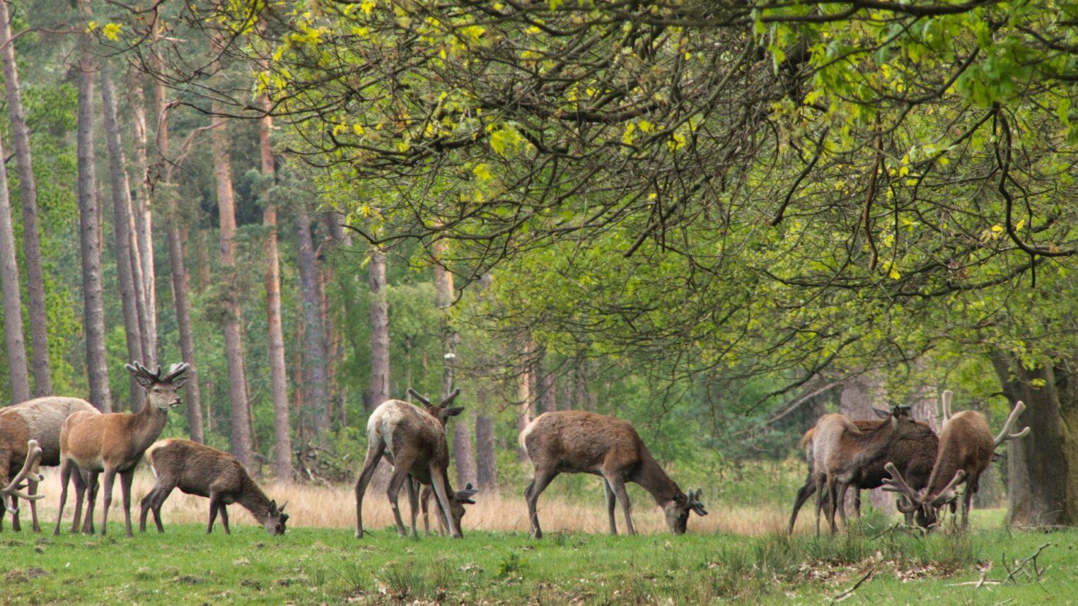 Prive tocht met de boswachter